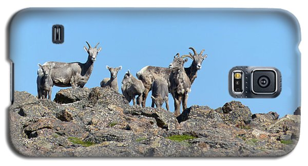 Bighorn Sheep Galaxy S5 Case