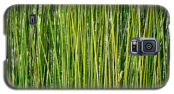 Biltmore Bamboo Galaxy S5 Case