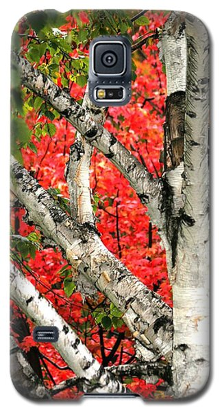 Galaxy S5 Case featuring the photograph Birch Eclipsing Maple by Doris Potter