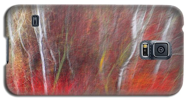 Birch Trees Abstract Galaxy S5 Case by Tara Turner