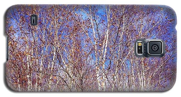 Orange Galaxy S5 Case - Birch Trees And Blue Sky In Autumn by Matthias Hauser