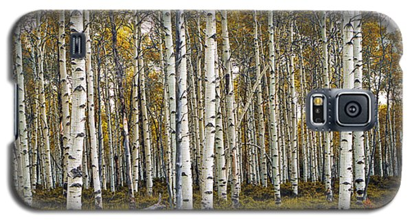 Aspen Trees In Autumn Galaxy S5 Case