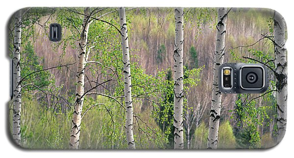 Galaxy S5 Case featuring the photograph Birch Trees by Vladimir Kholostykh