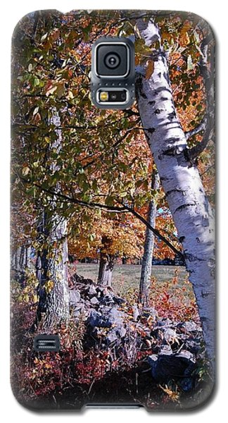Galaxy S5 Case featuring the photograph Birches by Mim White