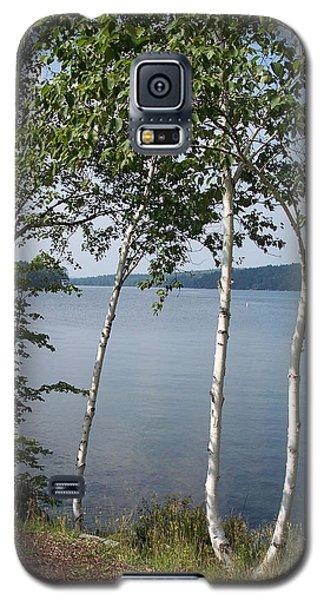 Birches On Sunapee Galaxy S5 Case