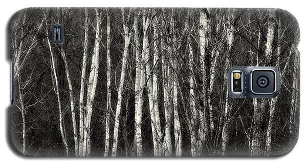 Birches Galaxy S5 Case