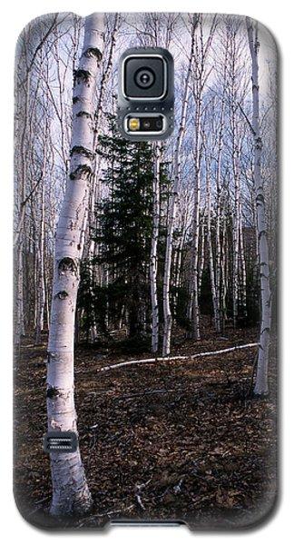 Birches Galaxy S5 Case by Skip Willits