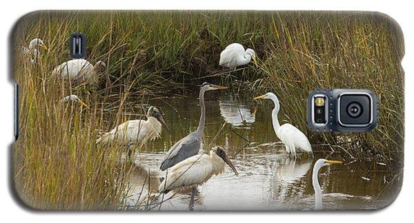 Bird Brunch Galaxy S5 Case by Patricia Schaefer