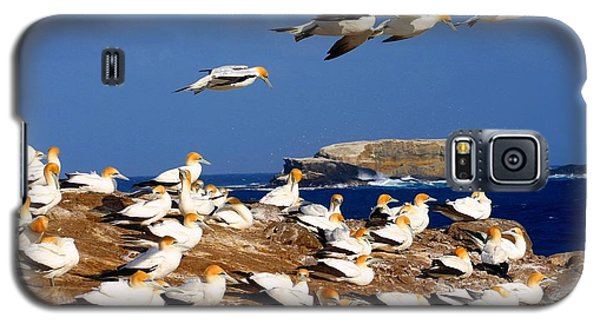 Galaxy S5 Case featuring the photograph Bird Colony Australia by Henry Kowalski
