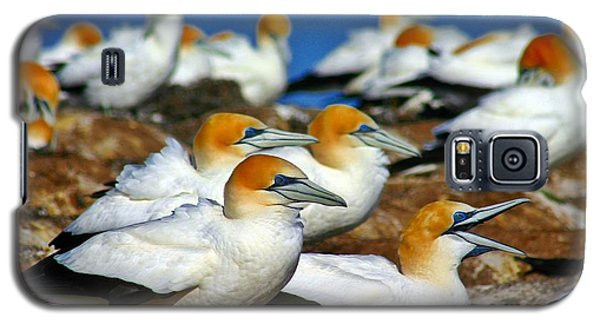 Galaxy S5 Case featuring the photograph Bird Colony Australia2 by Henry Kowalski