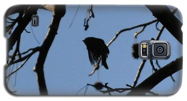 Galaxy S5 Case featuring the photograph Bird In Flight by Tara Potts
