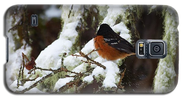 Bird In Snow Galaxy S5 Case