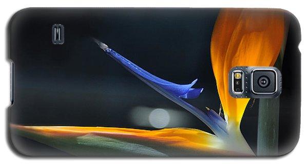 Bird In The Window Galaxy S5 Case