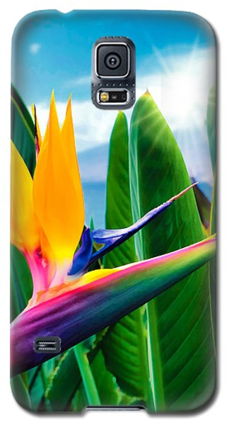 Bird Of Paradise 5 Galaxy S5 Case