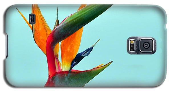 Bird Of Paradise Against Aqua Sky Galaxy S5 Case