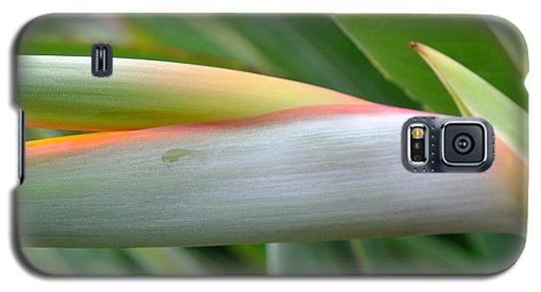 Bird Of Paradise Bud Galaxy S5 Case