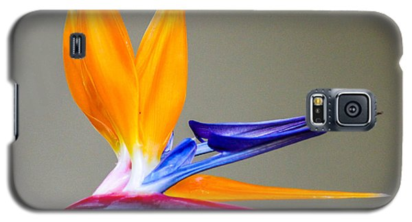 Bird Of Paradise Flower Galaxy S5 Case