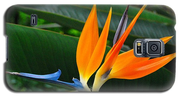 Bird Of Paradise  Galaxy S5 Case by JRP Photography