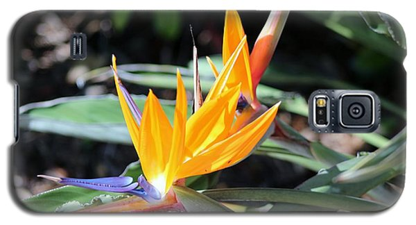 Bird Of Paradise Galaxy S5 Case by Nance Larson
