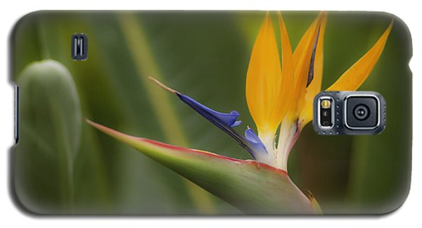 Galaxy S5 Case featuring the photograph Bird Of Paradise by Sherri Meyer