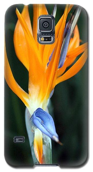 Bird Of Paradise Study 1 Galaxy S5 Case