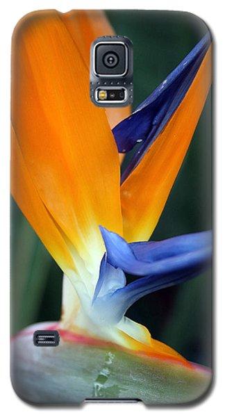 Bird Of Paradise Study 2 Galaxy S5 Case