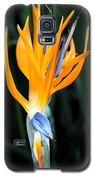 Bird Of Paradise Study 3 Galaxy S5 Case