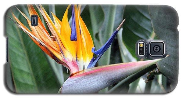 Bird Of Paradise Study 4 Galaxy S5 Case