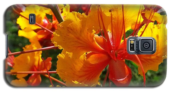 Galaxy S5 Case featuring the photograph Bird Of Paradise by Suzanne Silvir
