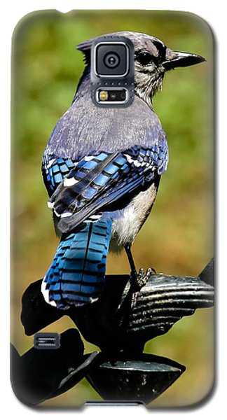Bird On A Bird Galaxy S5 Case by Robert L Jackson
