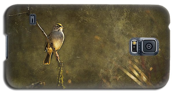 Bird On A Branch Galaxy S5 Case