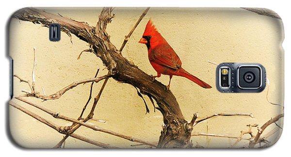 Bird On A Vine Galaxy S5 Case
