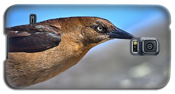 Bird On The Kure Beach Pier Galaxy S5 Case