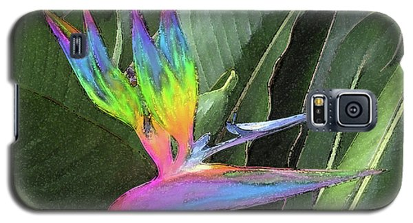 Bird Ow  Paradise Galaxy S5 Case by Suzette Kallen