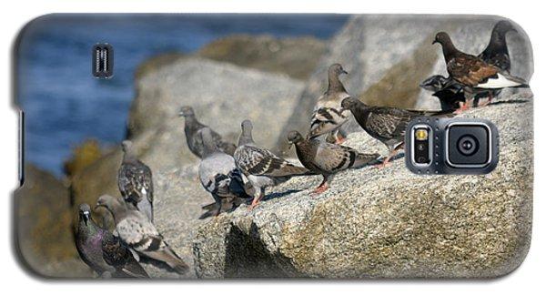 Bird Rock Beach Galaxy S5 Case