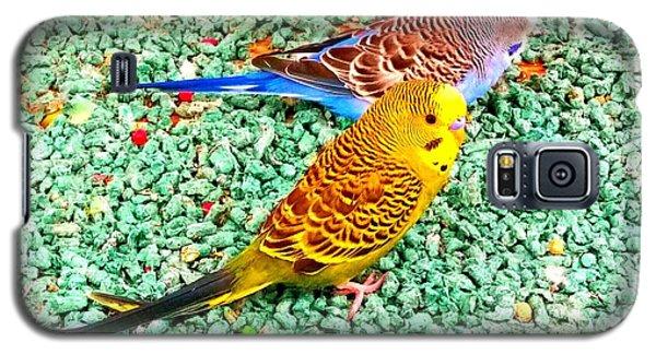 Bird Galaxy S5 Case