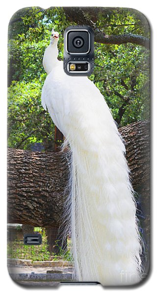 Bird - White Peacock Pose- Luther Fine Art Galaxy S5 Case by Luther Fine Art
