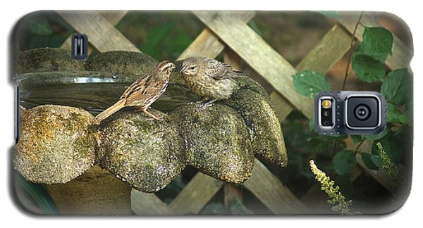 Birdbath Rendezvous Galaxy S5 Case by Margie Avellino