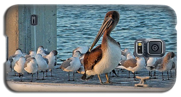 Birds - Among Friends Galaxy S5 Case by HH Photography of Florida