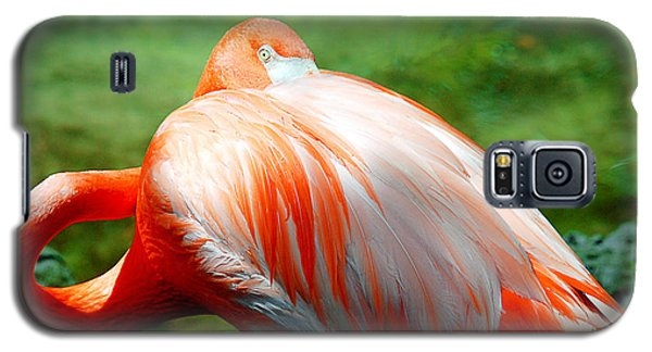 Bird's Eye View Galaxy S5 Case