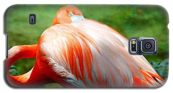 Bird's Eye View Galaxy S5 Case by Beverly Stapleton