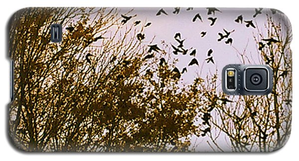 Birds Of A Feather Flock Together Galaxy S5 Case by Thomasina Durkay