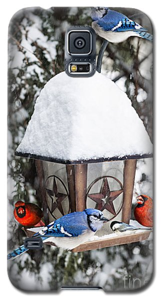 Bluejay Galaxy S5 Case - Birds On Bird Feeder In Winter by Elena Elisseeva