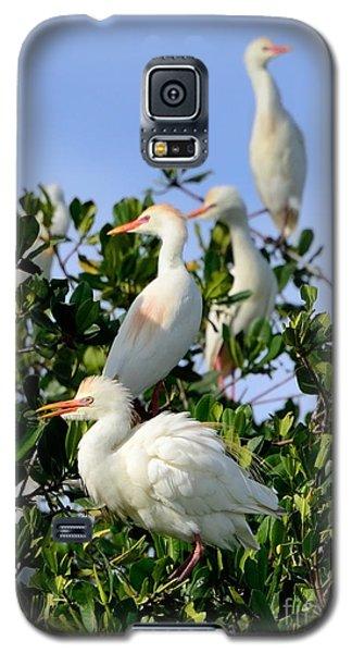 Birds Quartet Galaxy S5 Case