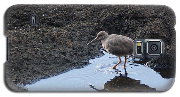 Bird's Reflection Galaxy S5 Case by Belinda Greb