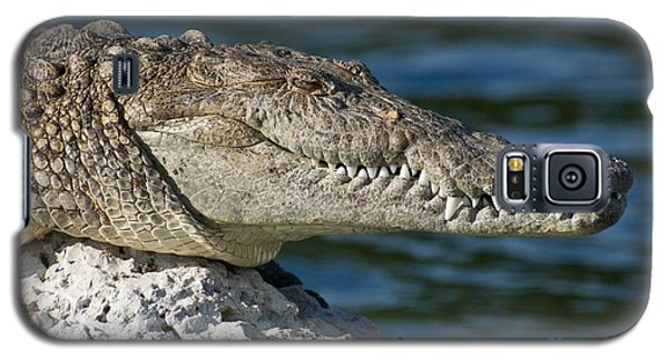 Galaxy S5 Case featuring the photograph Biscayne National Park Florida American Crocodile by Paul Fearn