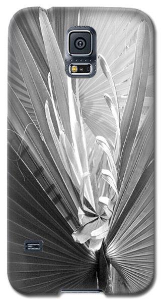 Bismark Palm Galaxy S5 Case by Jim Snyder