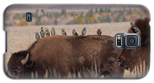 Bison And Buddies Galaxy S5 Case