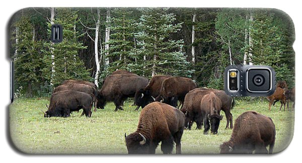 Bison At North Rim Galaxy S5 Case by Laurel Powell