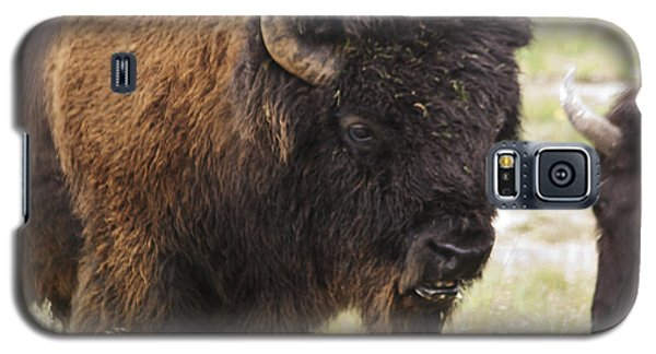 Bison From Yellowstone Galaxy S5 Case by Belinda Greb